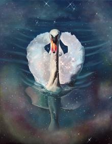 Swan, Black Abbey Studios, space, stars, nebula, cosmos, water